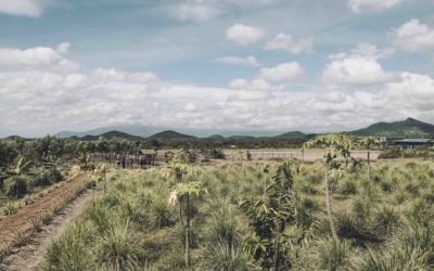 CAMBODGE – Kampot plantation de poivre