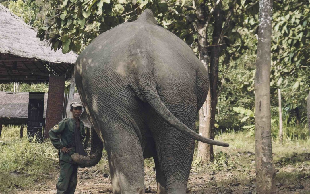 LAOS – Eléphant conservation center