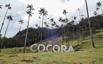 COLOMBIE – Salento, Vallée de Cocora