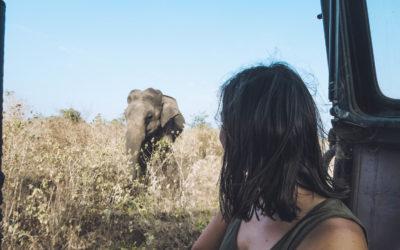Sri lanka – Safari Udawalawe