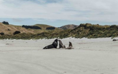 NOUVELLE ZELANDE- Oamaru, Dunedin et la peninsule d'Otago